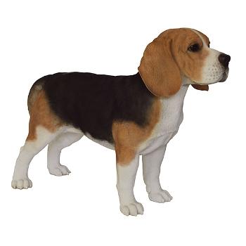 Самая неприхотливая порода собак - название и описание породы