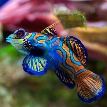 Аквариум для начинающих какие рыбки