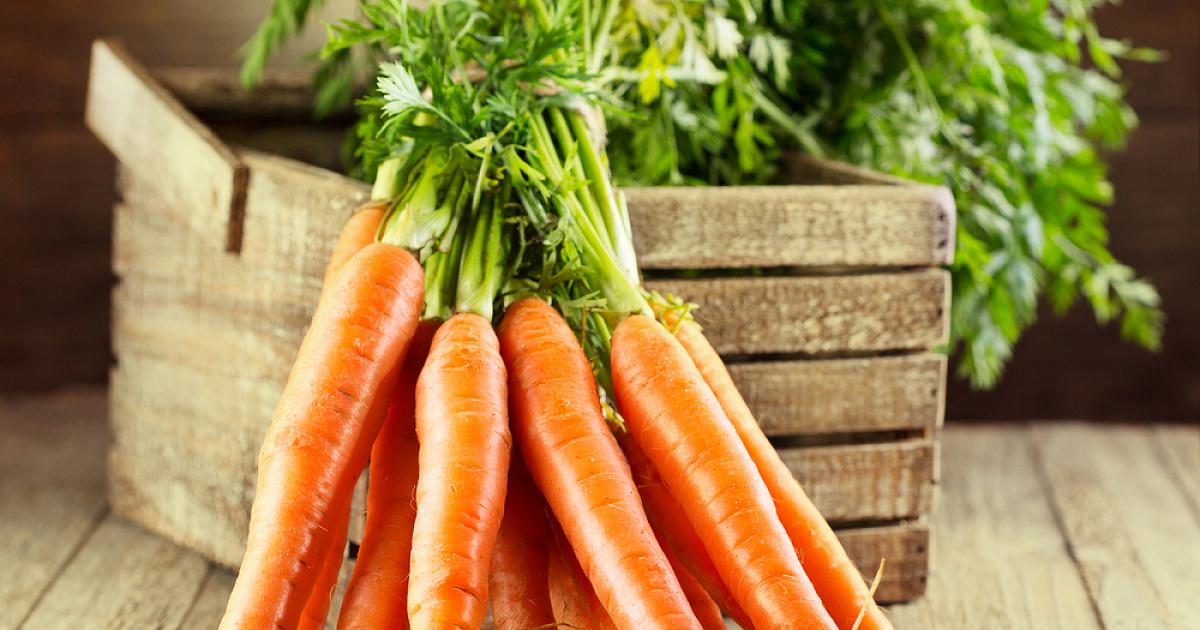 Лучшие сорта моркови для средней полосы