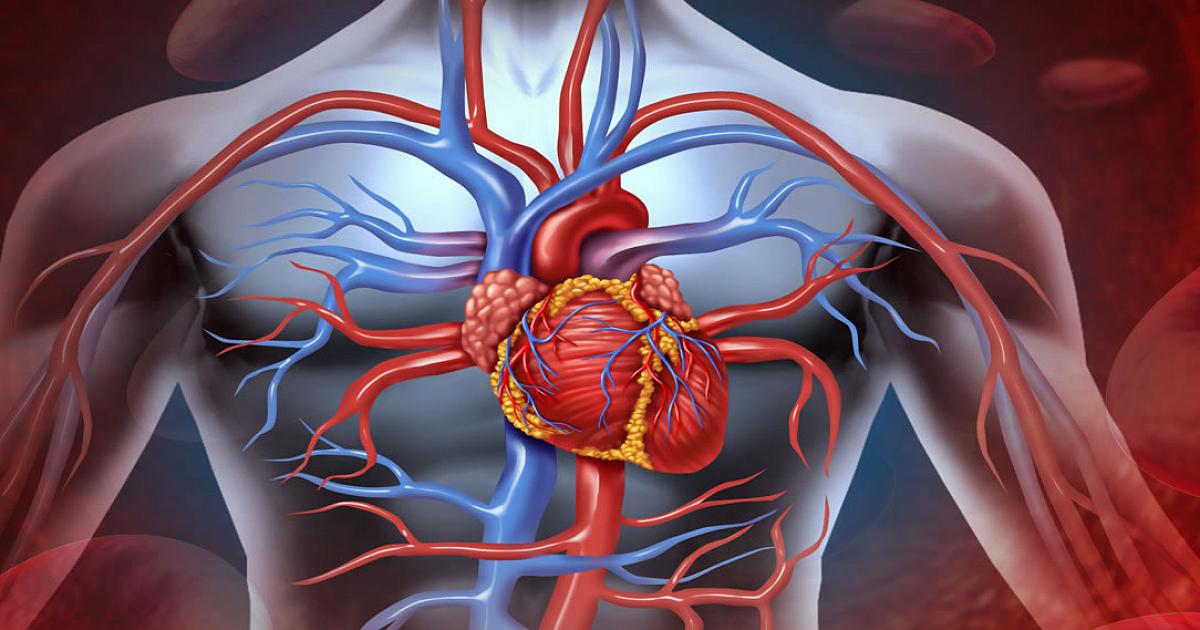 Препараты для профилактики сердечно-сосудистых заболеваний — обзор эффективных лекарств для профилактики болезней сосудов и сердца