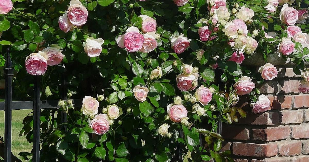 Почвопокровные розы: описание, лучшие сорта, посадка и уход || 10 лучших почвопокровных роз  рейтинг 2020 года топ 10