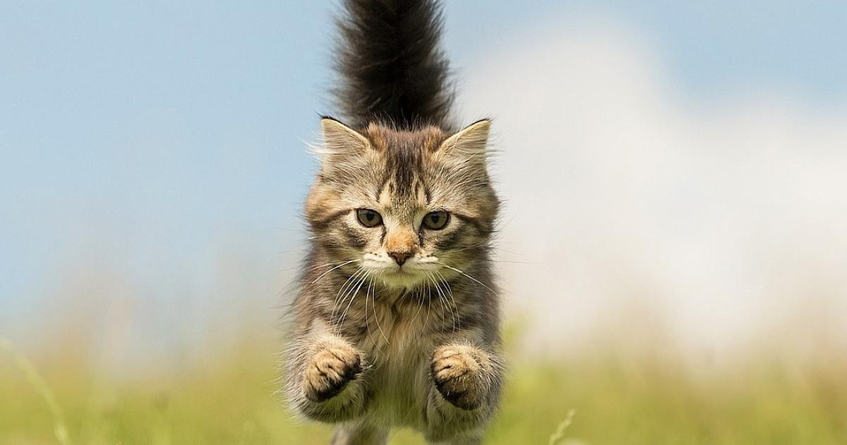 Противоблошиные средства для кошек